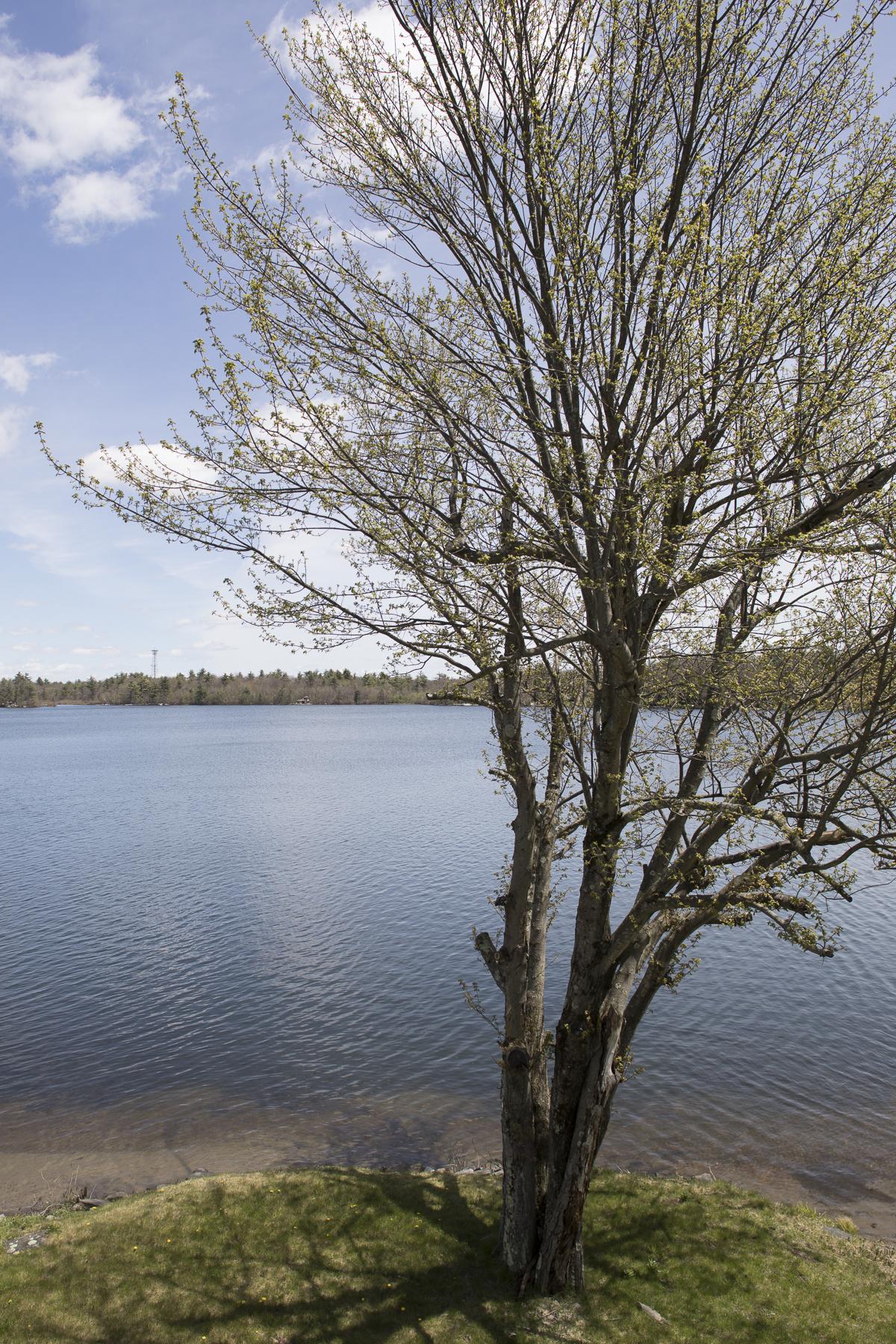 LAKE SHORE DRIVE-8262